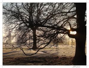 Une délicieuse lumière... DSC00564-13-300x229