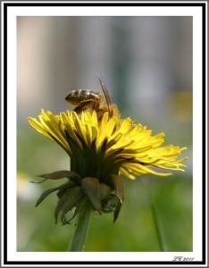 La tête dedans... dans insectes IMG_7564-234x300