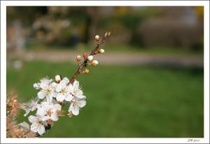 C'est le printemps IMG_7576-300x205
